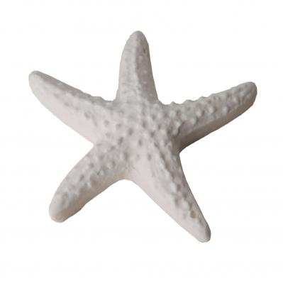 Gessetto a forma di STELLA MARINA