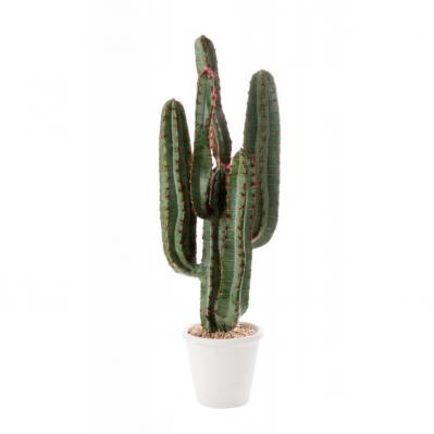 Cactus Da Terra Piccolo