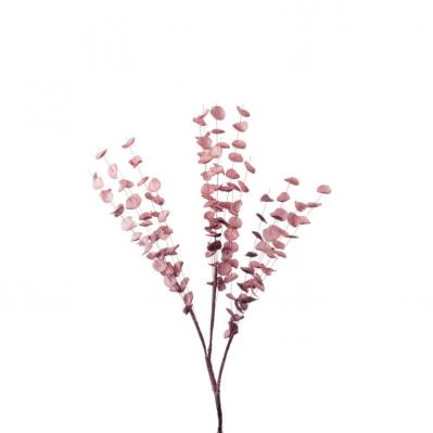 Eucalipto - Rosa