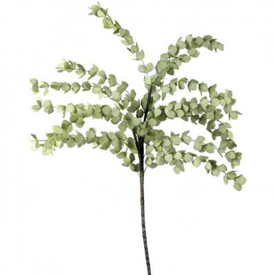 Eucalipto Verde Chiaro
