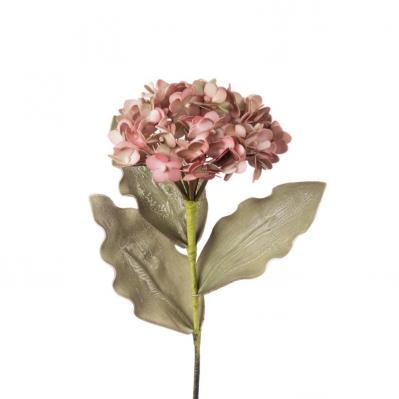 Ortensia - Rosa