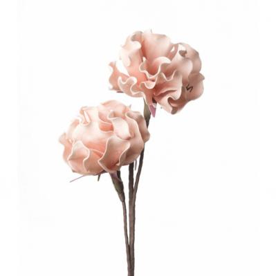 Peonia Erbacea - Rosa