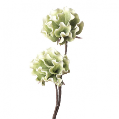 Peonia Erbacea - Verde