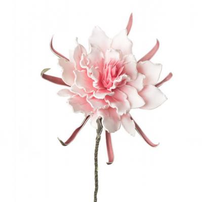Protea Reale - Rosa
