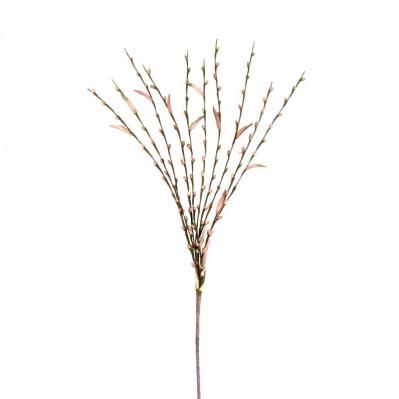 Salix Rosa