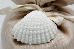 Accessori - Conchiglia bianca